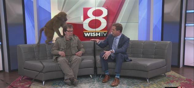 Larry Battson Monkey Around On Midday